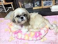 栞、3歳になったよ(^_-)-☆ - わんわん・パラダイス