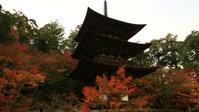 西明寺 - belakangan ini