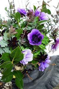 アネモネと楽しく遊ぶ - お花に囲まれて