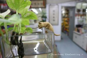 中国医学も心得てます~太子蟲草哥 - 鴛鴦茶餐廳  いんよんちゃ~ちゃんてぃん