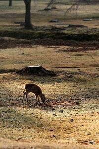 かくかく鹿ジカ・・ - katsuのヘタッピ風景