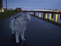 ぼやぼやーんのお散歩 (^_^;) - 犬連れへんろ*二人と一匹のはなし*