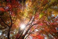 光線 - akiy's  photo