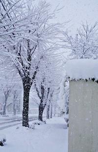 いきなりドッカーン30センチの雪 - お花に囲まれて