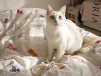 猫のお留守番 ニーナちゃん編。 - ゆきねこ猫家族