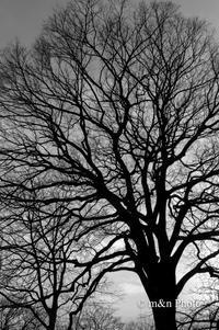 冬木立 - 季節のおくりもの