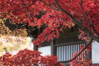 2017年鎌倉の紅葉長寿寺の紅葉 - エーデルワイスPhoto
