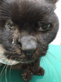 山の猫、緊急保護 - 大波の会 日記