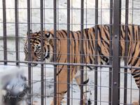 野毛山動物園12月7日 - お散歩ふぉと