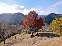 山の湯湯ヶ島温泉 - 白壁荘だより  天城百話