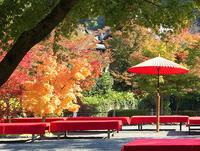 京都紅葉散歩/'17 Autumn - portagioie