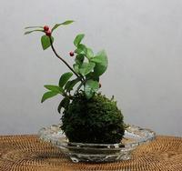 苔玉の「景色」 - 万願寺通信