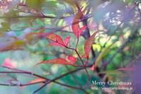 今年ももう僅か最後の紅葉の草木たち - Art Lesson