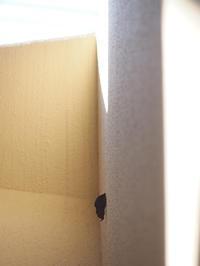 最も身近なところでアケビコノハ - 90% Papillon -蝶の写真を撮っています-