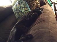 ネコ: 鑑賞会、続き - にゃんこと暮らす・アメリカ・アパート