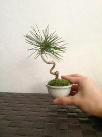 今年最後の盆栽 - アーティスティックな陶器デザイナーになろう