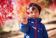 冬桜と紅葉の世界城峯公園 - Full of LIFE