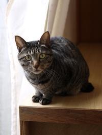 猫のお留守番 きとちゃん編。 - ゆきねこ猫家族
