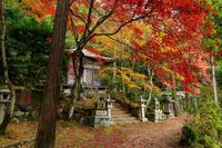 京都の紅葉2017 護法堂弁財天の紅(くれない) - 花景色-K.W.C. PhotoBlog