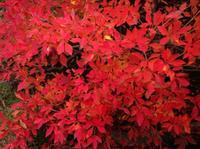秋の思い出   犬山城 - 石のコトバ