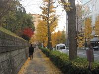 ♪2017イルミネーション★渋谷~表参道~赤坂界隈etc - MY FAVORITE SPACE