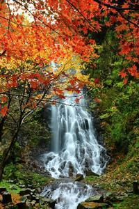 霧降りの滝、紅葉編 - 彩