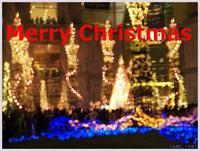 Merry Christmas   171) - 趣味の写真 ~オリンパスE-M1MarkⅡとE-M1、E-5とたまにフジフィルムXZ-1も使っています。~