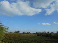 半年ぶりの写真を!暖かい日です。 - 沖縄山城紅茶 茶摘み日記