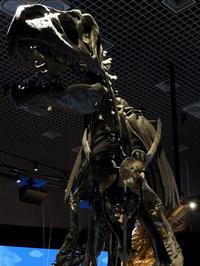 東京そぞろ歩き:国立科学博物館(その4)・恐竜 - 日本庭園的生活