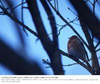 埼玉県県民の森 2017.12.9 - 鳥撮り遊び