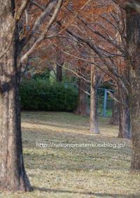 師走の公園で - ねこの目天気。