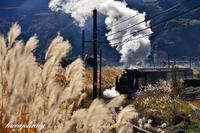 すすきの蒸気機関車 - 蒸気をおいかけて・・・少年のように