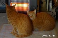 日差しがあって暖かい日は幸せな六たち - 猫と自然と散歩の日々