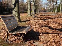 落ち葉と紅葉と♪新宿御苑はいつ行ってもステキな公園です♪ - ルソイの半バックパッカー旅