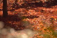 見頃過ぎの紅葉を・・・♪ - 今日もカメラを手に・・・♪