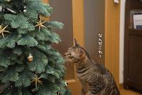 クリスマスツリーがやってきた! - にゃんず日記