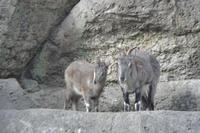バーラル達 - 動物園へ行こう