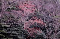 小鳥の餌を探して - yosimasaフォトアルバム