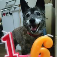 16年 - Paws  Family~犬と歩く365日~