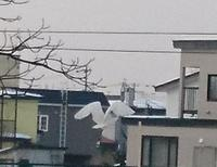 シロサギの写真。函館市街地にて - 工房アンシャンテルール就労継続支援B型事業所(旧いか型たい焼き)セラピア函館代表ブログ