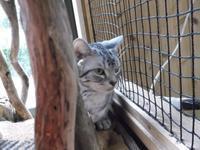 猫の国語辞典 - ネコと文学と猫ブンガク