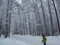 スノーシュートレッキングで雪の風景にどっぷり浸ろう! - 猪苗代からのぽぽんた通信