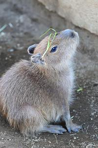 12月25日(月) 誠意 - ほのぼの動物写真日記