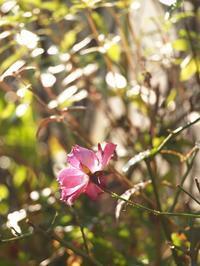 カズオ・イシグロ - hibariの巣