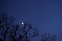 上弦の月 - 写瞬間