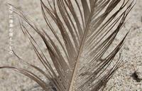 Meri Kirihimete - Tangled with・・・・・