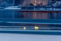 みちのく御所湖の白鳥達14 - みちのくの大自然