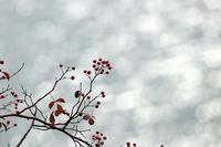 冬の光 - 但馬・写真日和