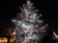 メリークリスマス - ぴなとつばめ母さんの病記録