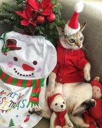 Merry Christmas🎄 - 八巻多鶴子が贈る 華麗なるジュエリー・デイズ